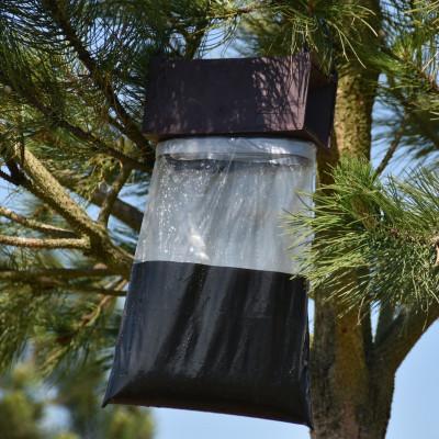 Piège à phéromone TRAMPA G - Processionnaire du pin, chêne et pyrale du buis