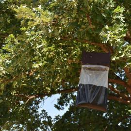 pack lutte chenille processionnaire du chêne - piège à phéromones Trampa G